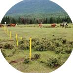 实行划区轮牧科学利用草原资源