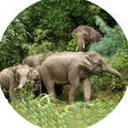 保护野生动物实现人与动物和平共处