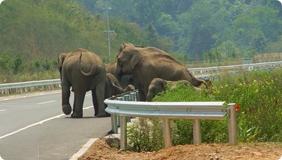 人与野生动物关系激化