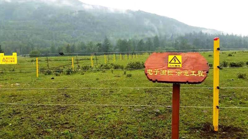 小牛看家电子围栏,走进新疆喀纳斯森林公园