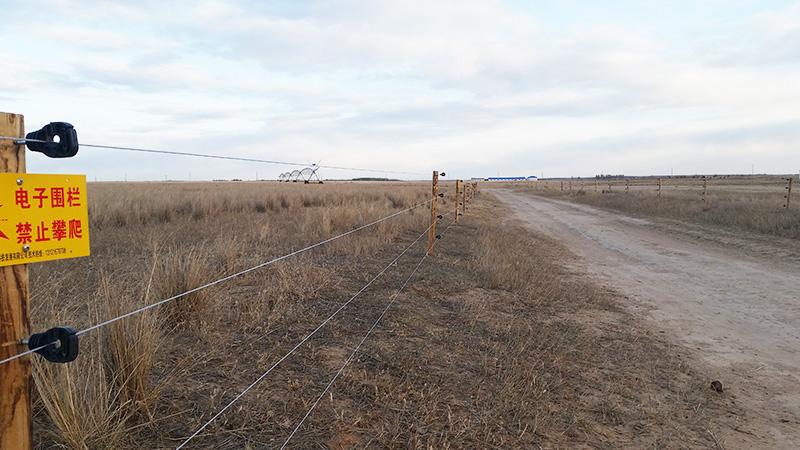 通辽谋旗畜牧局指定小牛看家电子围栏