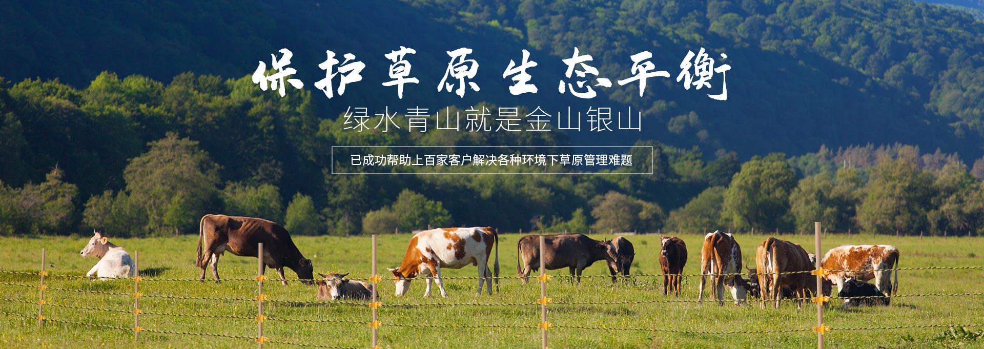 小牛看家-保护草原生态平衡