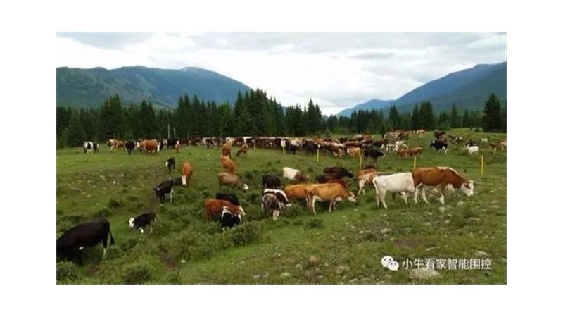 小牛看家畜牧电子围栏主要用途有哪些?