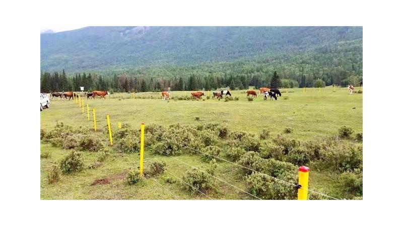 小牛看家电子围栏与传统围栏的区别分析!